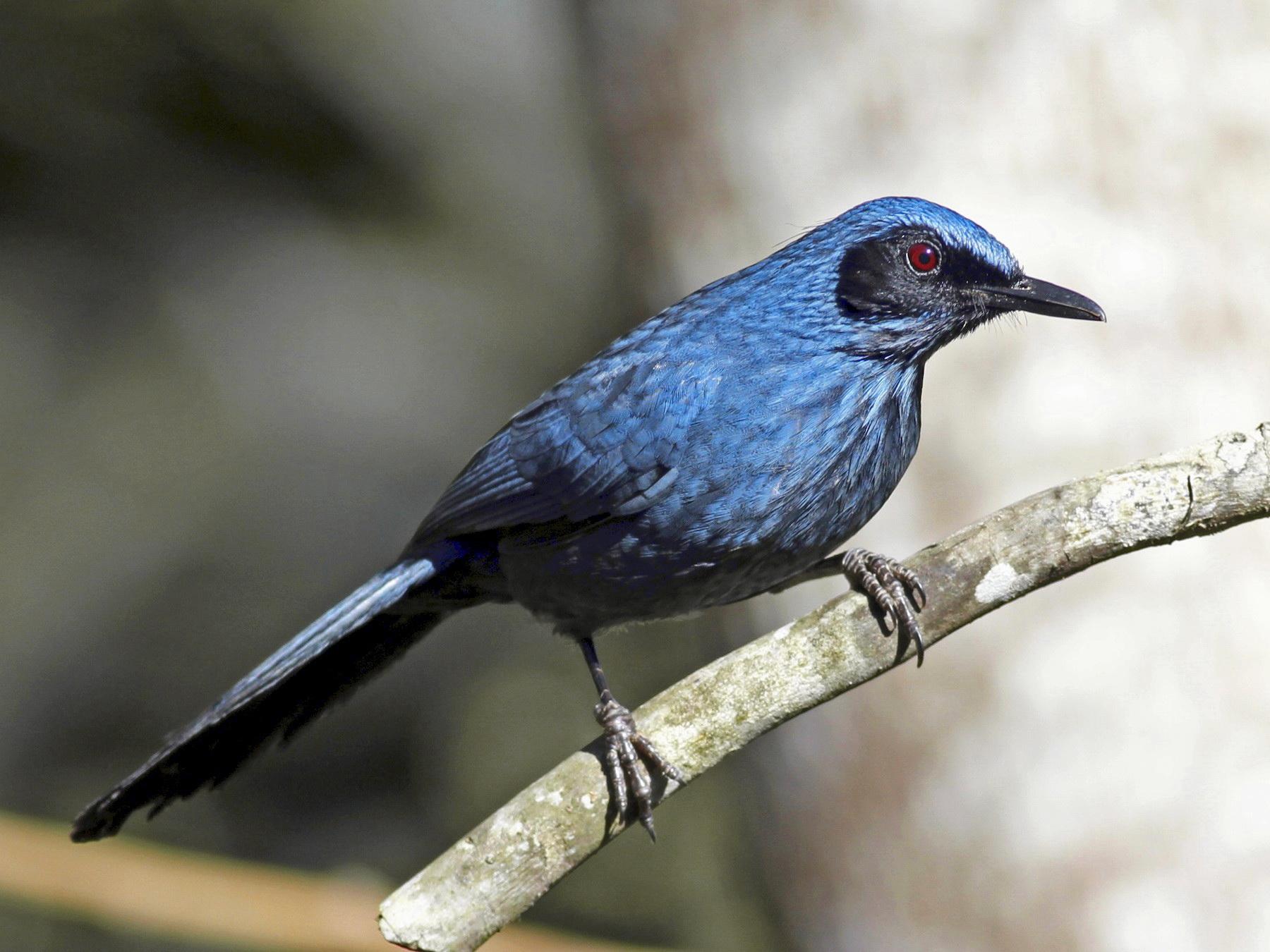 Blue Mockingbird hackers
